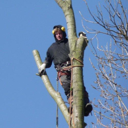 bomen zagen KDO 2013 over ons Bob de Jong  (7)_cr